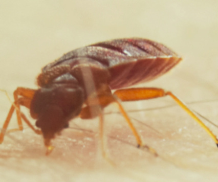 this is a picture of bed bug control pleasanton
