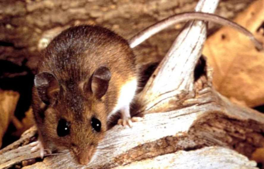 this is a picture of pleasanton rodent repairs